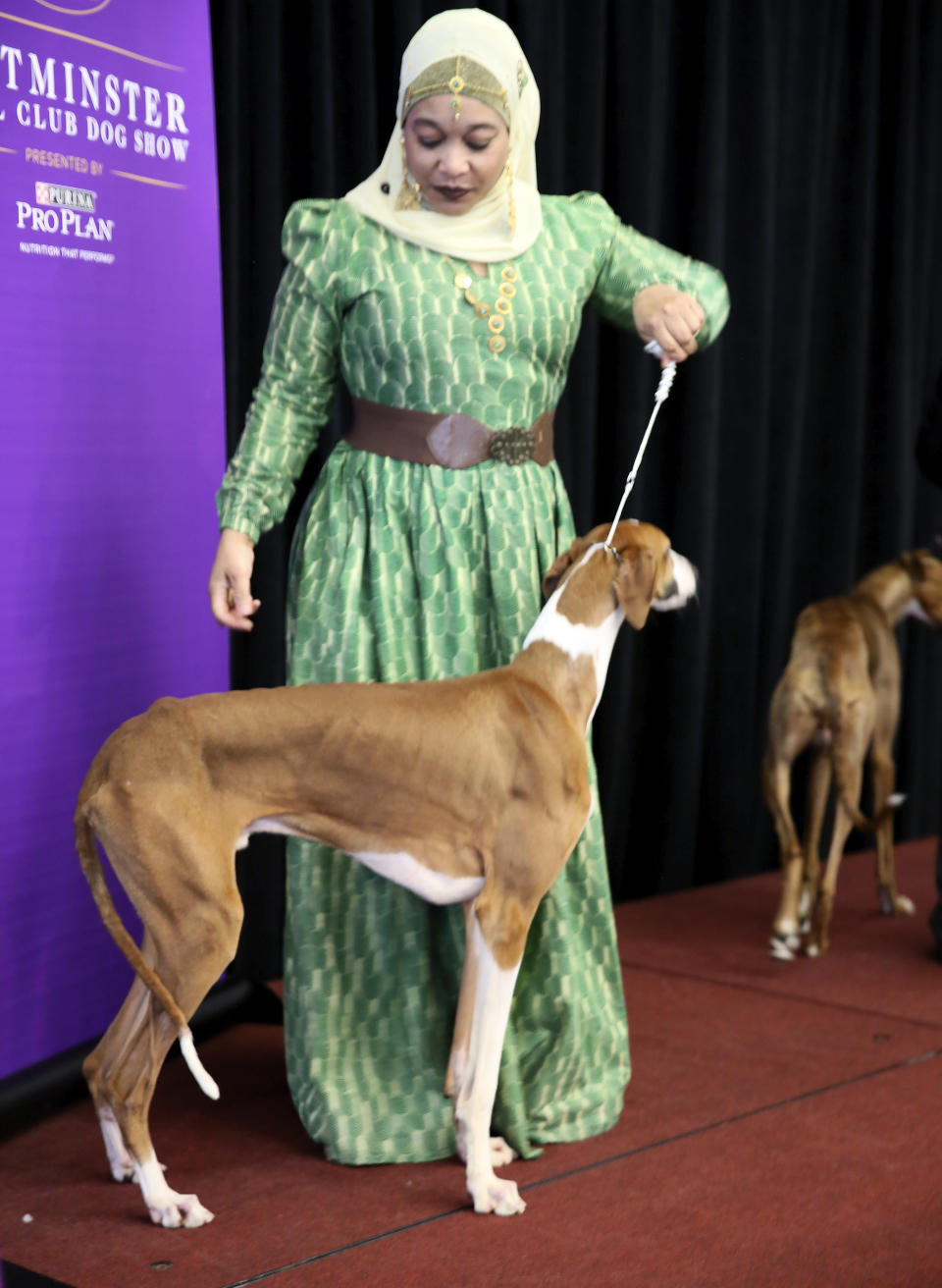 In this Tuesday, Feb. 4, 2020 photo, retired Philadelphia police officer Aliya Taylor poses with her Azawakh named Bahir at a Westminster Kennel Club news conference in New York. The Azawakh is a new breed to the Westminster show this year. There aren't many Muslims in the dog show world, and Taylor says she's never seen another handler wearing a hijab in the ring. Taylor and her dog aren't in the Westminster show this year, but hope to participate next year in America's most prestigious dog event. (AP Photo/Jennifer Peltz)