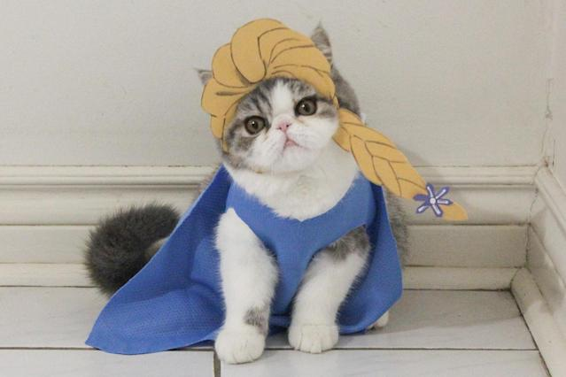 """<p>Snoopy, a male, looks less than thrilled to be wearing an Elsa outfit from the Disney movie, <em>Frozen.</em>""""People seem to love seeing the cats pose for the camera, and they leave heart-warming comments, which is great."""" (Photo: DailySnoopy/Caters News) </p>"""