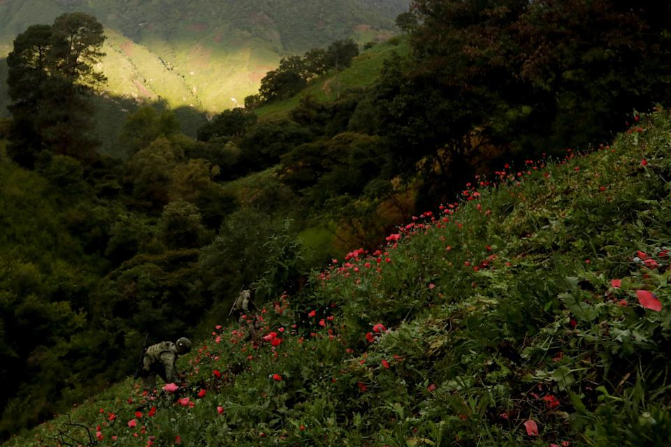 Soldiers destroy a field of illegal opium plantation in the Sierra Madre del Sur
