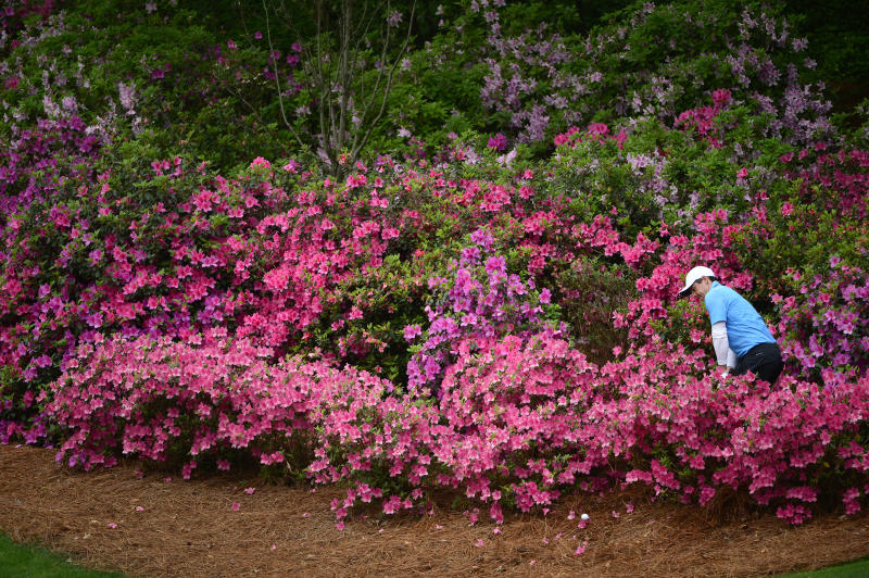 Rory McIlroy of Northern Ireland hits from the azalea's on No. 13 during the third round of the Masters at Augusta National Golf Club, Saturday, April 7, 2018. (Photo by Charles Laberge/Augusta National via Getty Images)