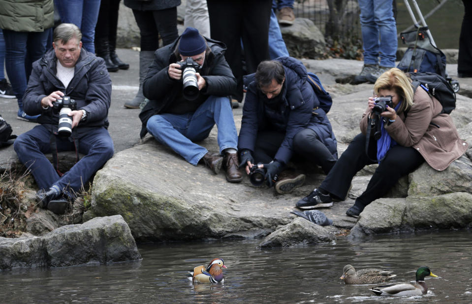 FILE - In this Dec. 5, 2018 file photo, people try to get pictures of a Mandarin duck, center, in Central Park in New York. The pandemic, which shut so many people inside their homes, has led to an increased appreciation of nature in general, and of outdoor activities like hiking, gardening and birding. Folks who have been bird-watching in Central Park for years say they see lots of newcomers to the hobby. (AP Photo/Seth Wenig, File)