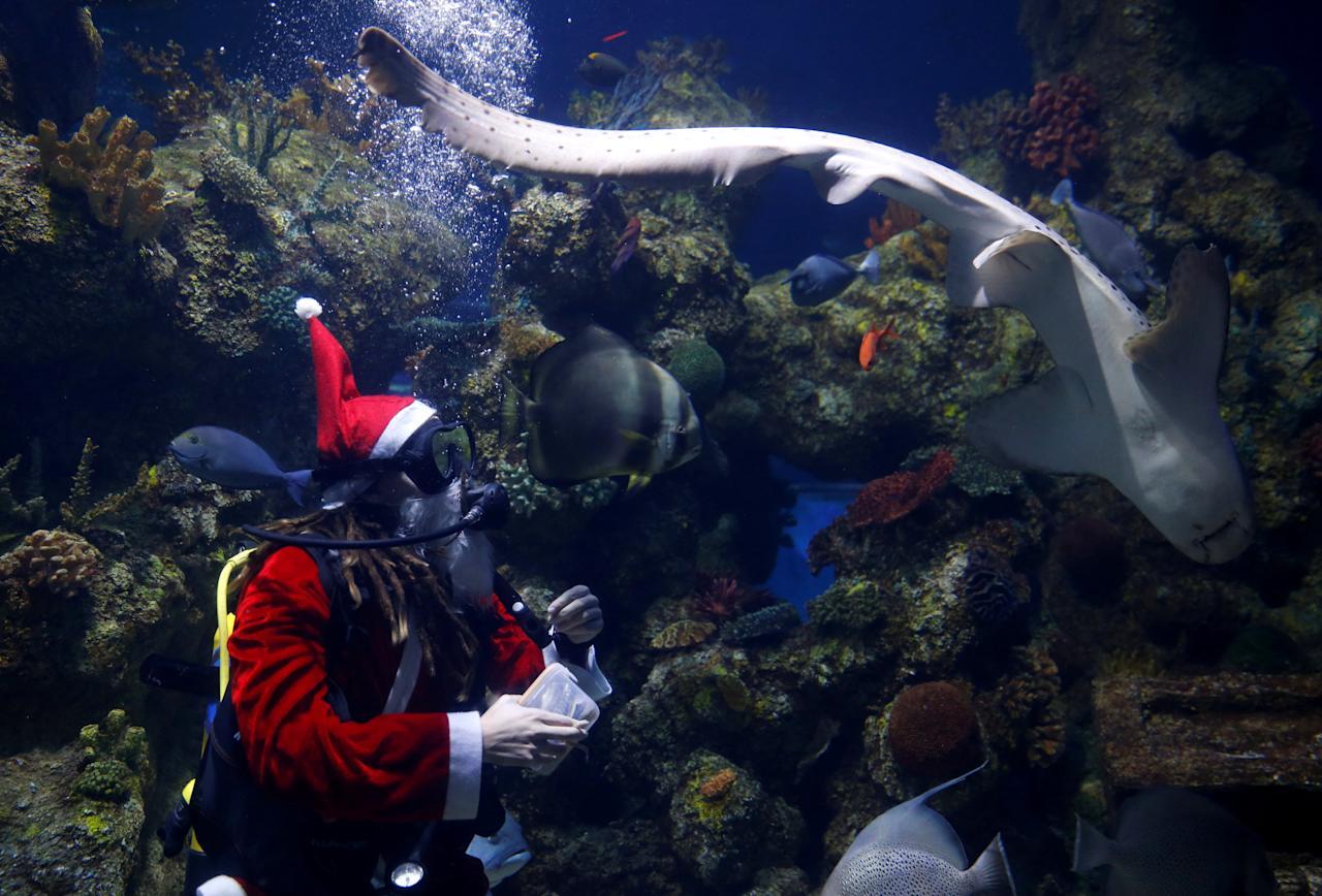 A diver dressed as Santa Claus feeds fish inside a fish tank at the Malta National Aquarium in Qawra, Malta, December 11, 2017. REUTERS/Darrin Zammit Lupi     TPX IMAGES OF THE DAY