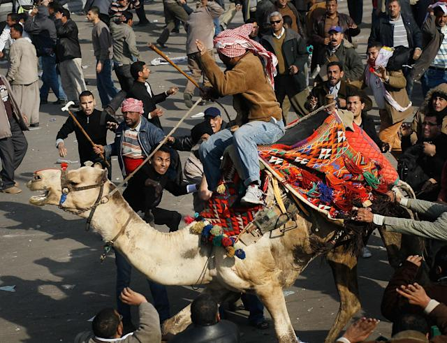 <p>A supporter of embattled Egyptian president Hosni Mubarek rides a camel through the melee during a clash between pro-Mubarek and anti-government protesters in Tahrir Square on February 2, 2011 in Cairo, Egypt. Yesterday President Mubarak announced that he would not run for another term in office, but would stay in power until elections later this year. Thousands of supporters of Egypt's long-time president and opponents of the regime clashed then today in Tahrir Square, throwing rocks and fighting with improvised weapons. (Photo by Chris Hondros/Getty Images) </p>