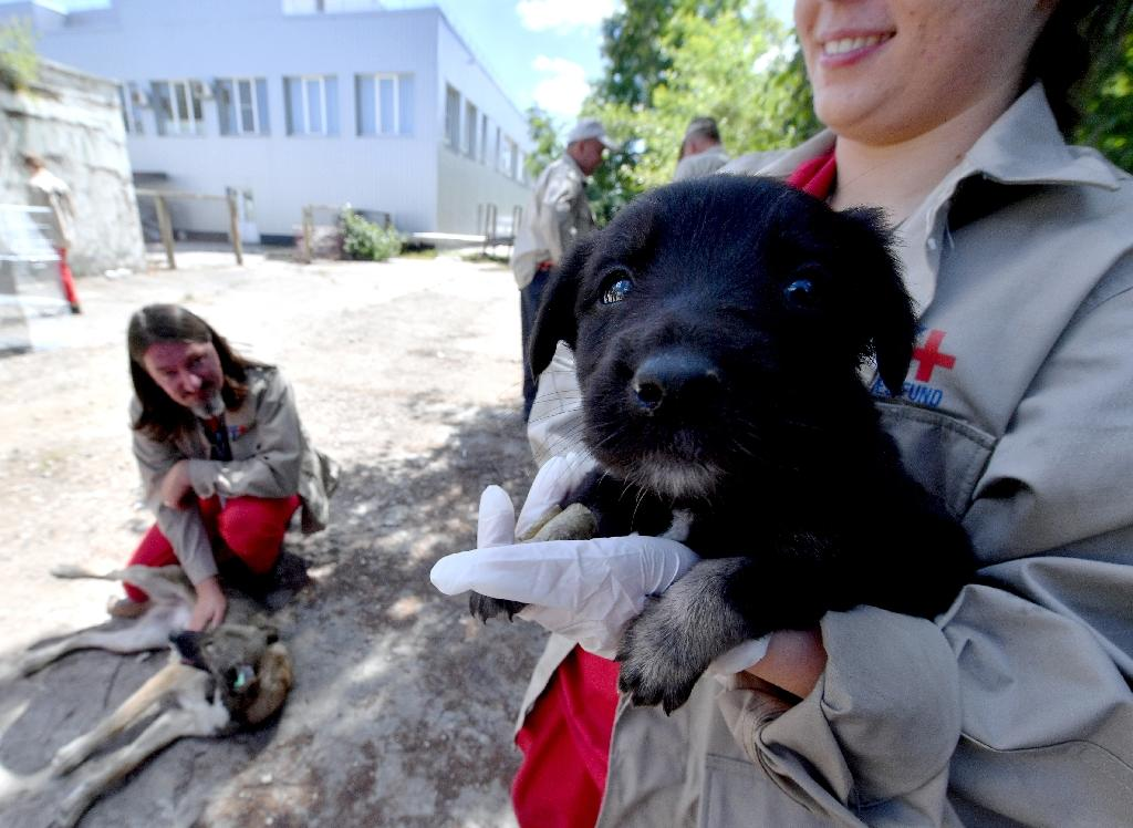 A volunteer holds a puppy at a hospital for stray dogs near the site of the 1986 Chernobyl nuclear disaster (AFP Photo/Sergei SUPINSKY)