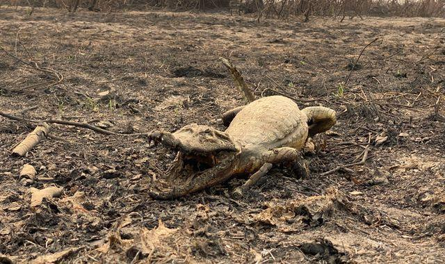 The Pantanal: How wildfire devastated life in the world's largest tropical wetland