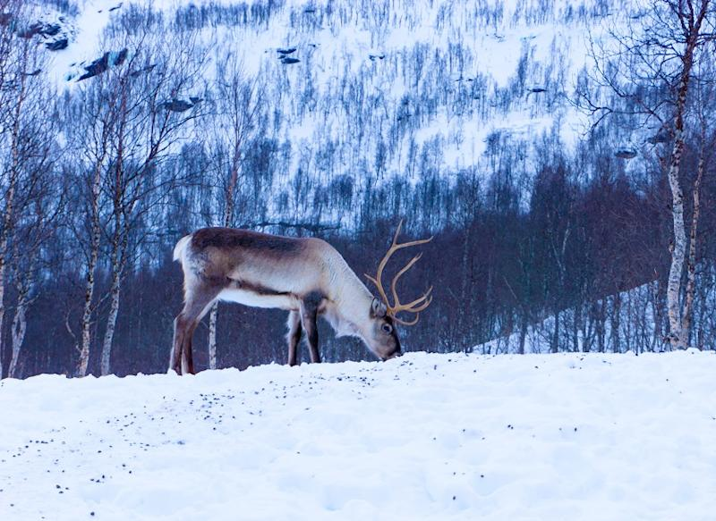 This viral theory about Santa's reindeer will blow your mind