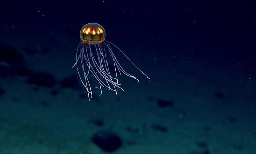 Would an anvil dropped into the Mariana Trench descend at a uniform speed?