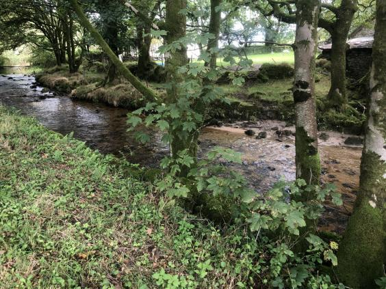 Tranquil waters: the young River Fowey (Simon Calder)