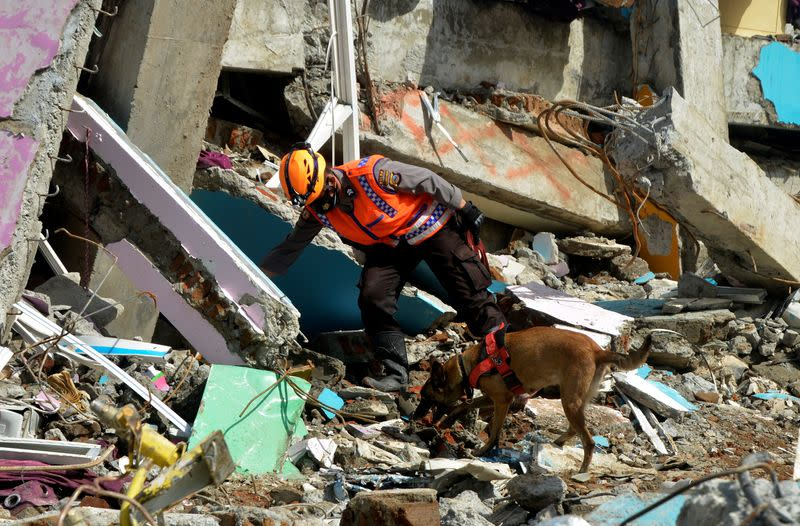 An Indonesian police officer with a K9 unit sniffer dog search for victims among the ruins of a hospital building collapsed following an earthquake in Mamuju