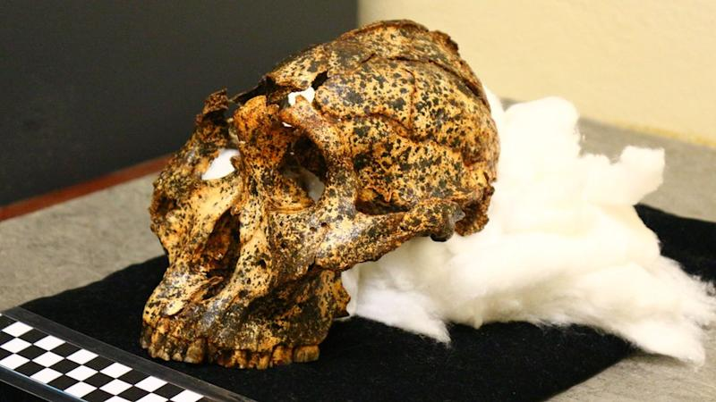 Two-million-year-old skull of human 'cousin' unearthed