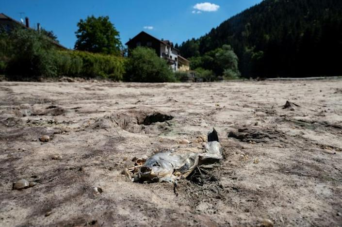 Parts of the Doubs river in eastern France have run dry (AFP Photo/SEBASTIEN BOZON)