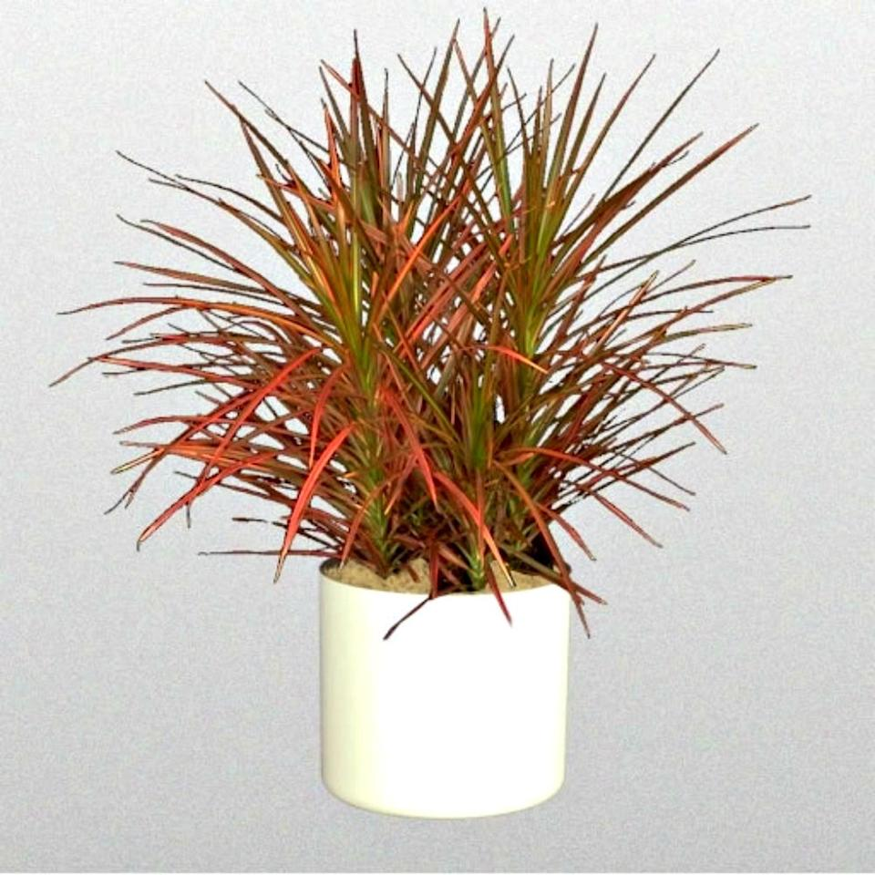"Dracaena Marginata in 6"" Pot (Credit: Etsy)"