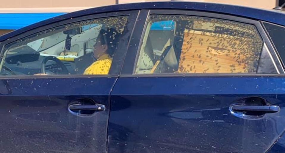 A woman is pictured driving a car full of bees.