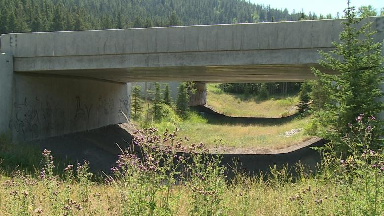 Wildlife corridors near Canmore mainly used by humans — and, often, their dogs