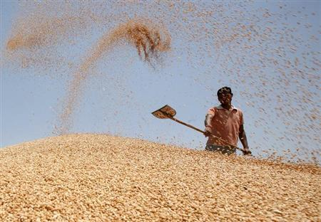 A labourer shovels wheat grain at a wholesale grain market on the outskirts of Amritsar May 13, 2013. REUTERS/Munish Sharma/Files