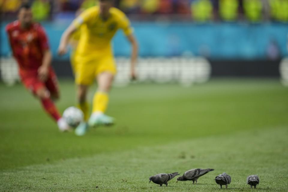 Pigeons on the pitch during the Euro 2020 soccer championship group C match between Ukraine and North Macedonia at the National Arena stadium in Bucharest, Romania, Thursday, June 17, 2021. (AP Photo/Vadim Ghirda, Pool)