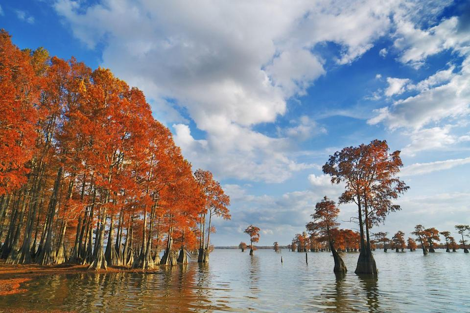 """<p><strong>Where to go:</strong> The bayou's bald cypress trees turn tan, cinnamon, and fiery orange in autumn before dropping their needle-like leaves. Try visiting <a href=""""https://www.nps.gov/jela/barataria-preserve.htm"""" rel=""""nofollow noopener"""" target=""""_blank"""" data-ylk=""""slk:Barataria Preserve"""" class=""""link rapid-noclick-resp"""">Barataria Preserve</a> just outside of New Orleans.</p><p><strong>When to go: </strong>Late November</p><p><a class=""""link rapid-noclick-resp"""" href=""""https://go.redirectingat.com?id=74968X1596630&url=https%3A%2F%2Fwww.tripadvisor.com%2FHotels-g60864-New_Orleans_Louisiana-Hotels.html&sref=https%3A%2F%2Fwww.redbookmag.com%2Flife%2Fg34045856%2Ffall-colors%2F"""" rel=""""nofollow noopener"""" target=""""_blank"""" data-ylk=""""slk:FIND A HOTEL"""">FIND A HOTEL</a></p><p><strong>RELATED: <a href=""""https://www.goodhousekeeping.com/life/travel/g3694/best-family-vacation-destinations/"""" rel=""""nofollow noopener"""" target=""""_blank"""" data-ylk=""""slk:30+ Best Family Vacations That Will Please Travelers Young and Old Alike"""" class=""""link rapid-noclick-resp"""">30+ Best Family Vacations That Will Please Travelers Young and Old Alike</a></strong></p>"""