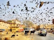 """I was hanging around the Jaipur's suburbia when I noticed a cloud of birds in the air. I've just instinctively released the shutter. Soul of Sir Hitchcock lives here I thought. (Maciej Makowski, Poland, Shortlist, Travel, Open Competition 2013 Sony World Photography Awards) <br> <br> <a href=""""http://worldphoto.org/about-the-sony-world-photography-awards/"""" rel=""""nofollow noopener"""" target=""""_blank"""" data-ylk=""""slk:Click here to see the full shortlist at World Photography Organisation"""" class=""""link rapid-noclick-resp"""">Click here to see the full shortlist at World Photography Organisation</a>"""