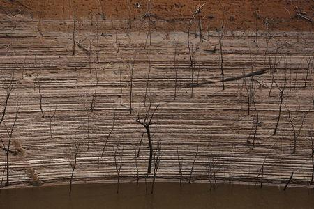 Trees and water marks are seen on previously submerged land at Guri dam in Bolivar state, Venezuela April 11, 2016. REUTERS/Carlos Garcia Rawlins
