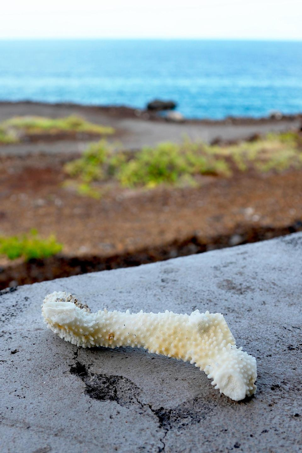 This Sept. 13, 2019 photo shows a chunk of bleached, dead coral shown on a wall near a bay on the west coast of the Big Island near Captain Cook, Hawaii. Coral reefs are vital around the world as they not only provide a habitat for fish _ the base of the marine food chain _ but food and medicine for humans. They also create an essential shoreline barrier that breaks apart large ocean swells and protects densely populated shorelines from storm surges during hurricanes. (AP Photo/Caleb Jones)