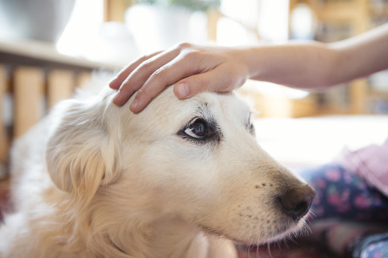 Make sure your dog is left in a safe space that it knows — and don't lock it in a room that's unfamiliar. (Getty Images)