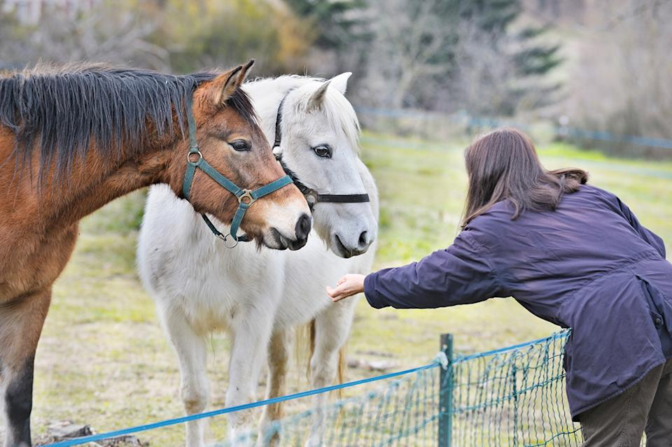 Woman leaning over a fence towards two horses.