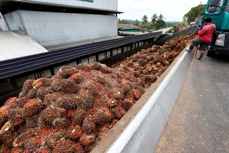 Palm rebounds, gains 1.5% on Indonesia's biodiesel push