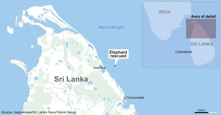 A group of naval personnel attached to the Eastern Naval Command saved an elephant caught in a current in the seas about 8 Nm off Kokkuthuduwai, Kokilai. (Source: maps4news/Sri Lanka Navy/Yahoo News)