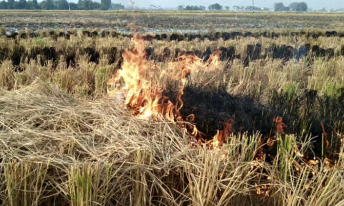 """This Oct. 14, 2019 frame from video shows shows paddy stubble burning in a field in Amritsar, India, Wednesday, Oct. 16, 2019. The Indian capital's air quality levels have plunged to """"poor,"""" a day after the government initiated stricter measures to fight chronic air pollution. The state-run Central Pollution Control Board's air quality index for New Delhi stood at 299 on Wednesday, about six times the recommended level. (AP Photo)"""