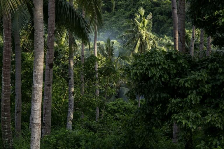 Palawan island is known as the country's last ecological frontier (AFP Photo/KARL MALAKUNAS)