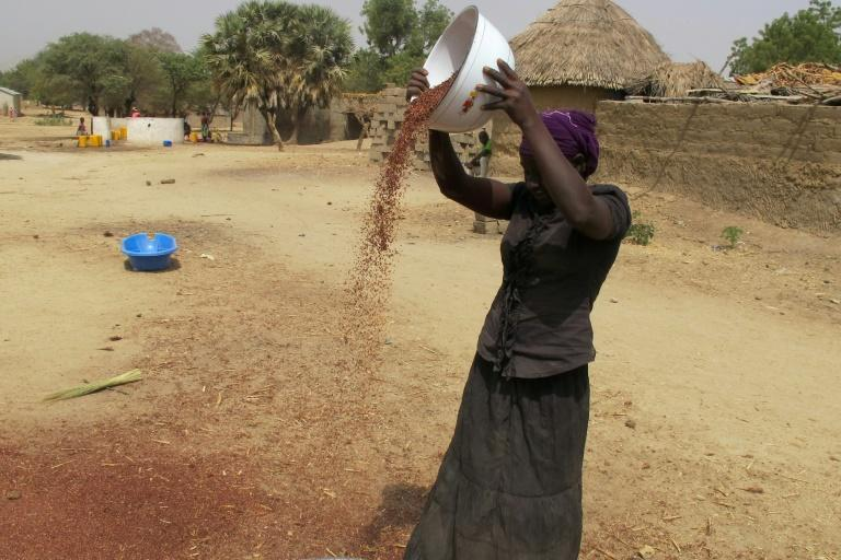 A woman spreads grain in front of her house in Koza on February 23, 2017, in the north of Cameroon near Lake Chad