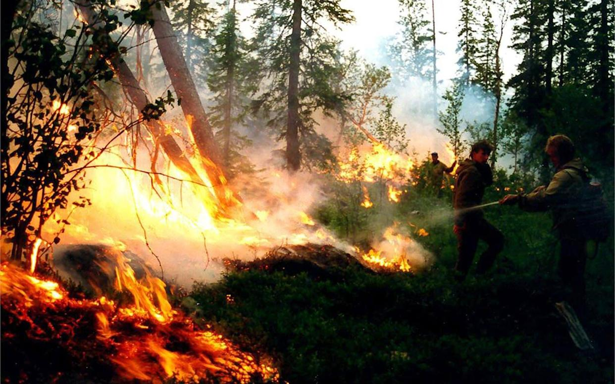 Forest protection officers battle wildfires in the Krasnoyarsk region - REX