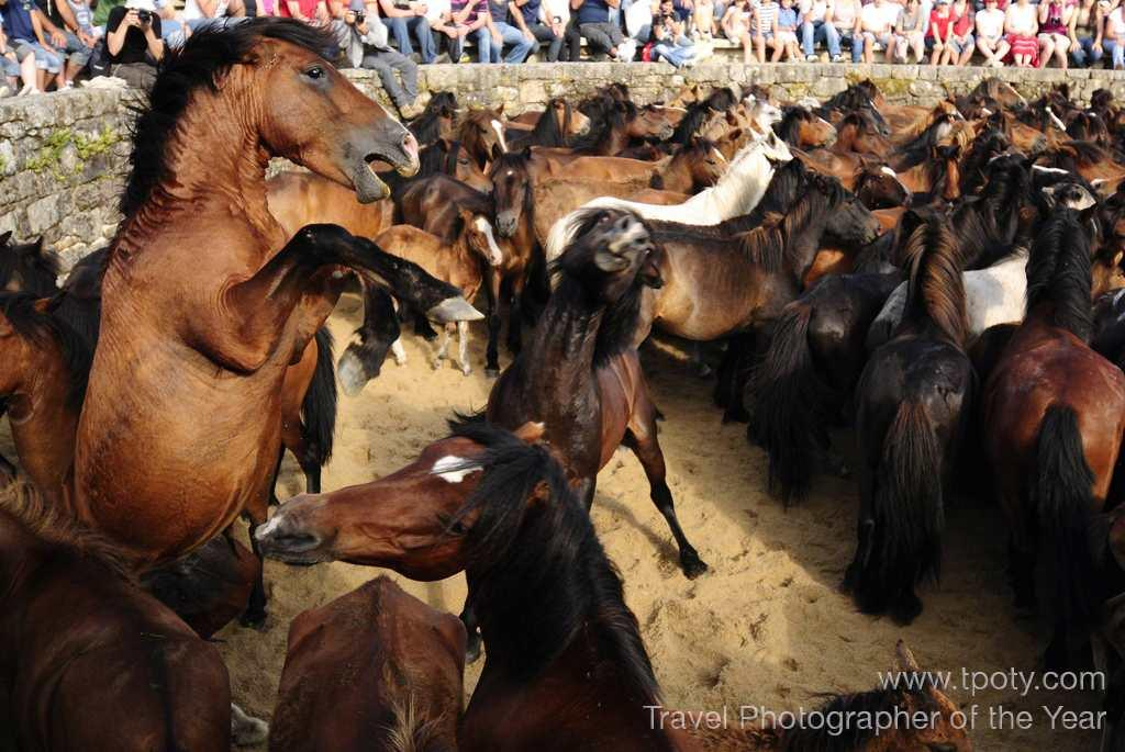 Rapa das Bestas (Shearing of the Beasts) festival, Sabucedo, Galicia, Spain. <br><br>Enrique López-Tapia, Spain <br><br>Camera: Nikon D300	 <br><br>Winner, Celebration portfolio category
