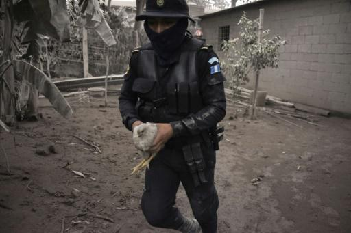 A police officer carries a chicken in the ash-covered village of San Miguel Los Lotes, in Escuintla Department, about 35 km southwest of Guatemala City, on June 4, 2018, a day after the eruption of the Fuego Volcano