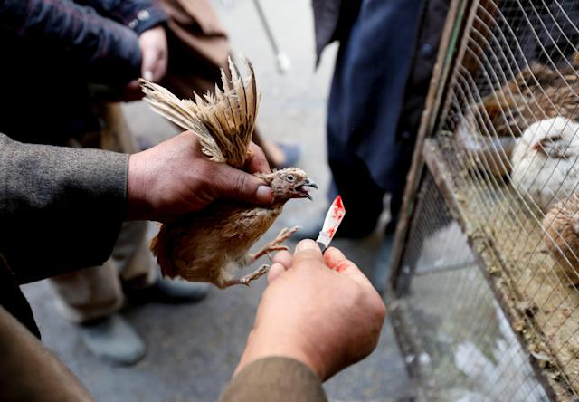 <p>A vendor holds a quail to slaughter for customers at Ka Faroshi bird market in Kabul, Afghanistan, Jan. 18, 2018. (Photo: Mohammad Ismail/Reuters) </p>