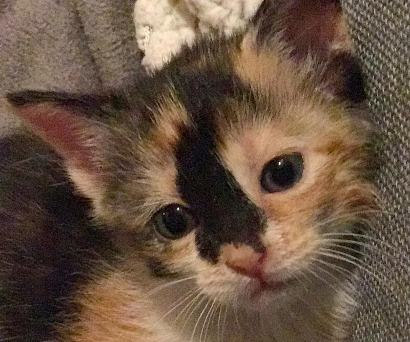 One of the many foster kittens thatspent formative timewith the Acro-Cats.