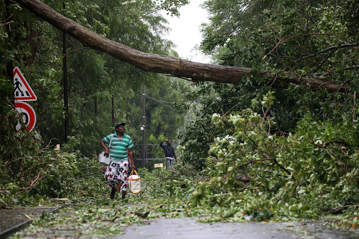 A man looks at a fallen tree as he walks along a street after the passage of Hurricane Maria in Pointe-a-Pitre, Guadeloupe, on Sept. 19, 2017.