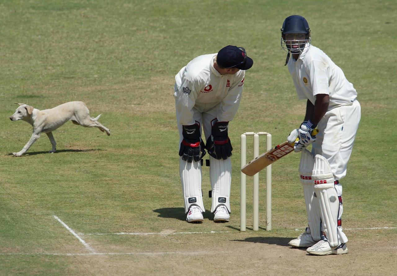 BANGALORE, INDIA - FEBRUARY 9:  A dog runs past England wicketkeeper Matthew Prior during  the first one day international between India A and England A at the Chinnaswamy cricket stadium on February 9, 2004 in Bangalore, India. (Photo by Stu Forster/Getty Images).