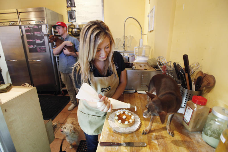 "This Friday, Nov. 19, 2010 photo shows Kelly Hannaford, the general manager and head chef at Three Dog Bakery, as she lets her dog Snoop, a miniature pinscher, try the icing she is using for a pumpkin pie for dogs, at the bakery in Pasadena, Calif.  The bakery offers a ""Feast for the Beast,"" which includes Lamb Wellington, a pound of bakery blend kibble, fresh carrots, a spinach dip and pumpkin pie.    (AP Photo/Richard Vogel)"