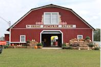 """<p><strong>Hayden, Alabama</strong></p><p>The name <strong><a href=""""http://greatpumpkinpatch.com/index.php?submenu=home"""" rel=""""nofollow noopener"""" target=""""_blank"""" data-ylk=""""slk:The Great Pumpkin Patch"""" class=""""link rapid-noclick-resp"""">The Great Pumpkin Patch</a></strong> really says it all. With a bungee jump, an inflatable slide and wagon rides, you'll forget you just went out for a few pumpkins. The other """"great"""" thing? Admission is free, though each activity will cost you a few bucks.</p><p><strong>RELATED: </strong><a href=""""https://www.goodhousekeeping.com/life/g4561/fall-activities/"""" rel=""""nofollow noopener"""" target=""""_blank"""" data-ylk=""""slk:15 Fun Fall Activities That Make the Most of the Best Season"""" class=""""link rapid-noclick-resp"""">15 Fun Fall Activities That Make the Most of the Best Season</a> </p>"""