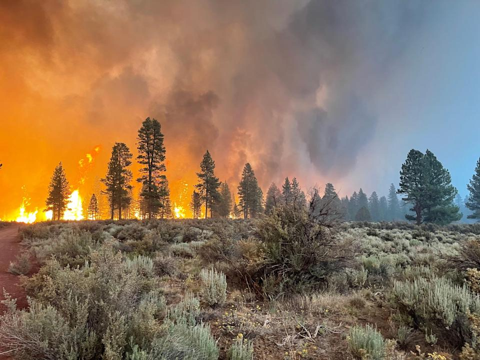 (Photo by USDA Forest Service via Getty Images)