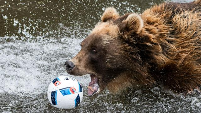 A bear in Russia was used to help kick-off a match in the Russian league, and the animal rights' group has criticised the decision