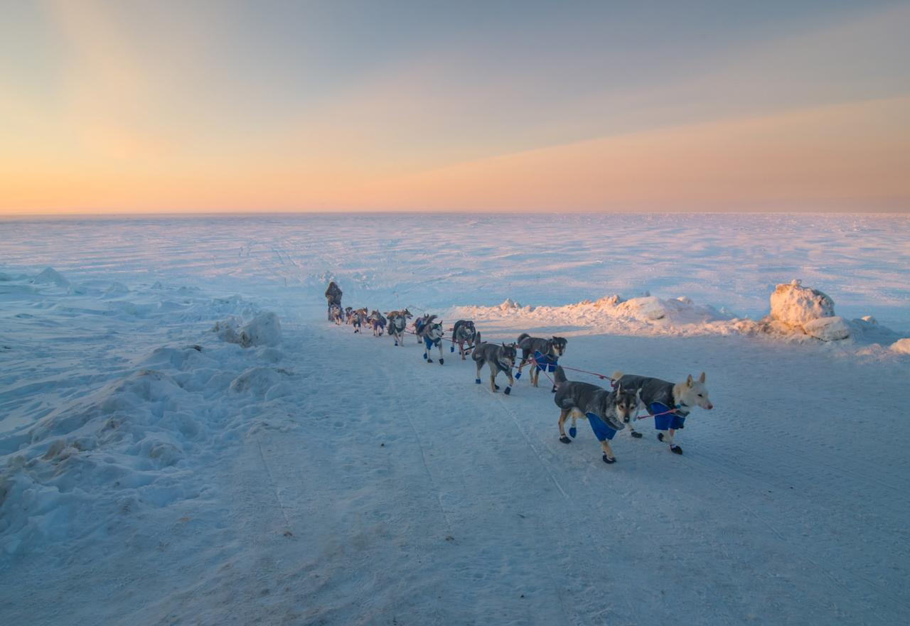 <p>Nicolas Vanier, of Paris, France, pulls off the sea ice with his race team and on to Front Street in Nome, Alaska, for the final stretch of the Iditarod Trail Sled Dog Race on Thursday, March 16, 2017. Nicolas finished in 36th place in the race. (Mike Kenney/Iditarod Trail Committee via AP) </p>