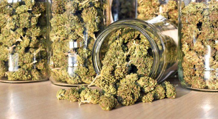 Glass jars filled with medicinal cannabis