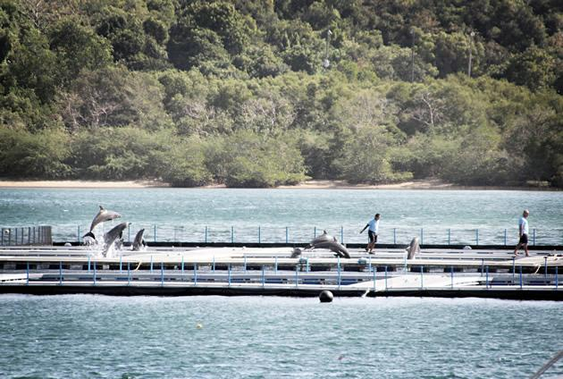 ACRES calls for public pressure on RWS dolphin enclosure