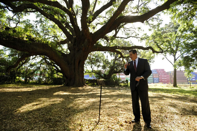 Ga. port officials promise to protect ancient oaks