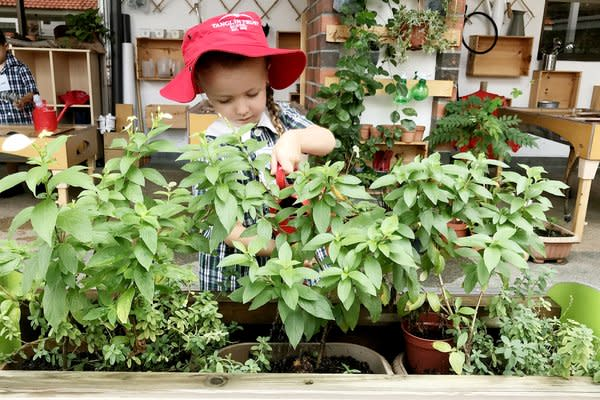 Outdoor areas are a magical hive of activity where children can eagerly explore.