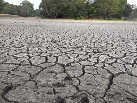 The bottom of Busbys Pond in Centennial Parklands is cracked and dry.