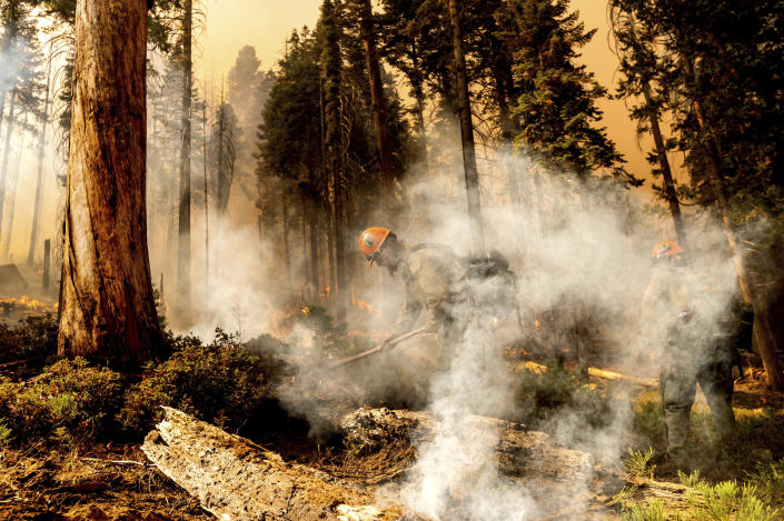 Firefighter Aidan Hart battles the Windy Fire as it burns in the Trail of 100 Giants grove of Sequoia National Forest, Calif., on Sunday, Sept. 19, 2021. (AP Photo/Noah Berger)