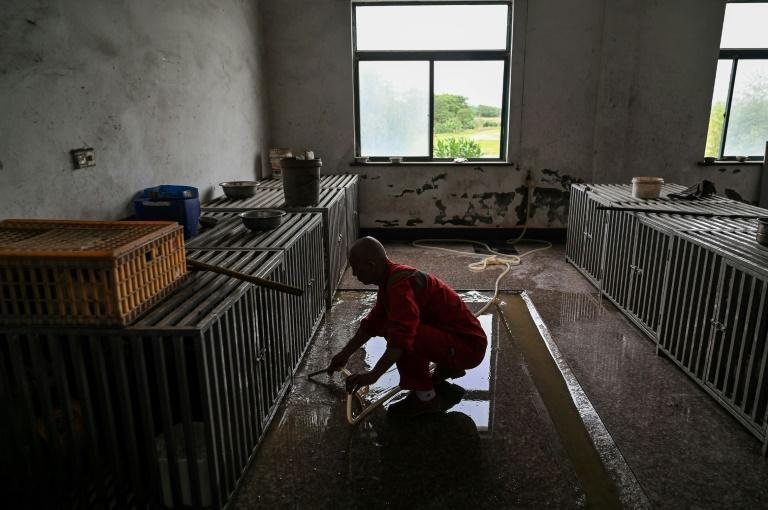 Driven by his faith, Zhi has been rescuing animals -- mostly dogs but also cats and other strays -- since 1994